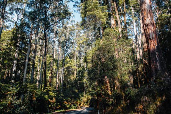 Kolicima po Australiji 5. dio (12 apostola)