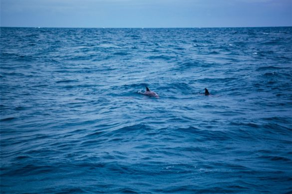 Kolicima po Australiji 16. dio (Hervey Bay i Noosa)