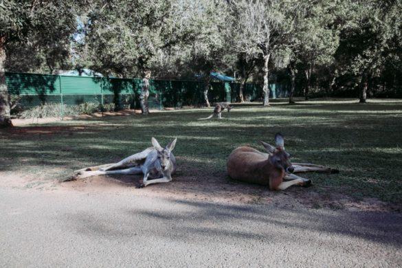 Kolicima po Australiji 17. dio (Australia Zoo)
