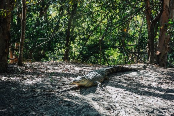 Kolicima po Australiji 13. dio (Hartley's Crocodile Adventure, Port Douglas i Airlie Beach)