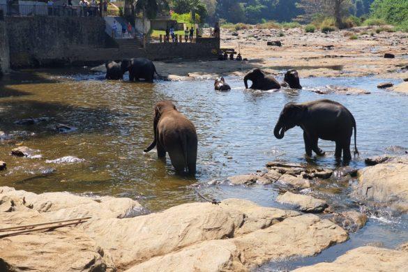 Šri Lanka – Biser Indijskog Oceana 6. dio (Pinnawala sirotište slonova / Kandy)